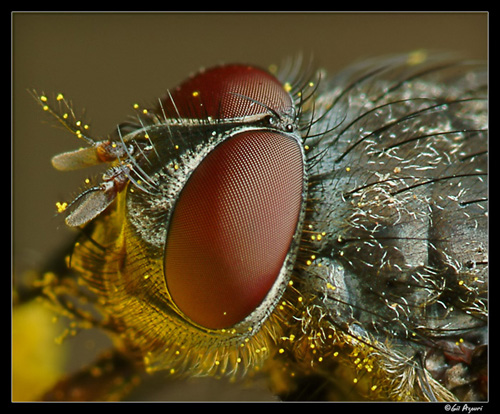 126 30 Brilliant Examples of Macro Photography