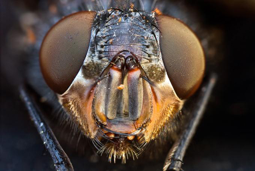 162 30 Brilliant Examples of Macro Photography