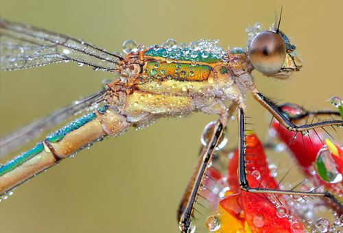 172 30 Brilliant Examples of Macro Photography