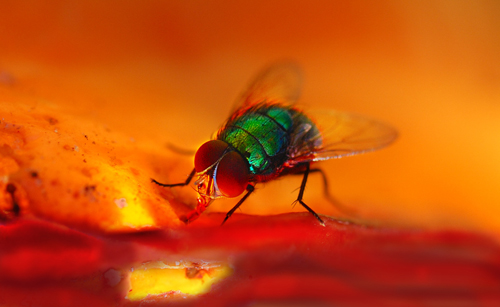 232 30 Brilliant Examples of Macro Photography