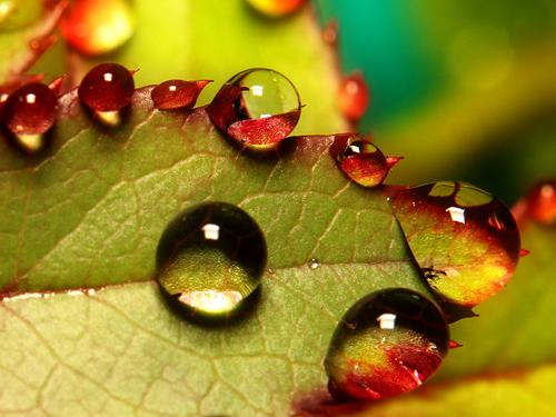 34 30 Brilliant Examples of Macro Photography
