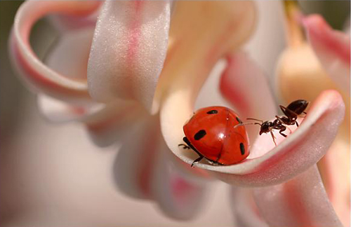 44 30 Brilliant Examples of Macro Photography