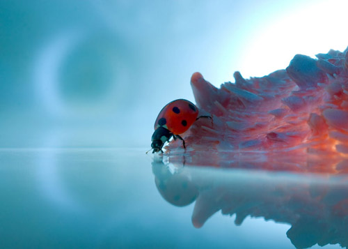 83 30 Brilliant Examples of Macro Photography