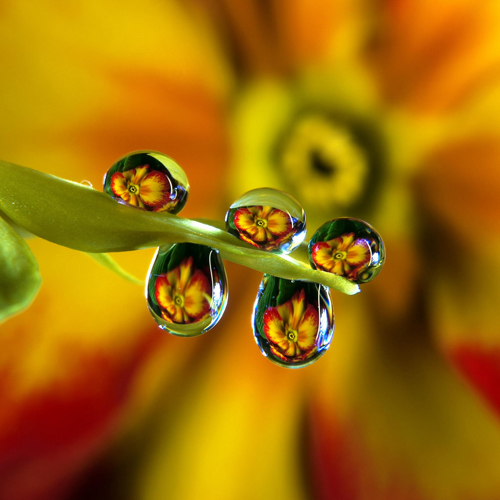 96 30 Brilliant Examples of Macro Photography
